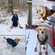 Scarpe Invernali di Cotone per Animali Domestici